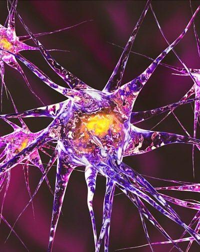 neurons in the brain during neurofeedback treatment